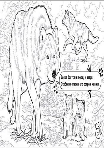 Раскраска Ранок Животные: В лесу (р) (А583004Р) купить ...